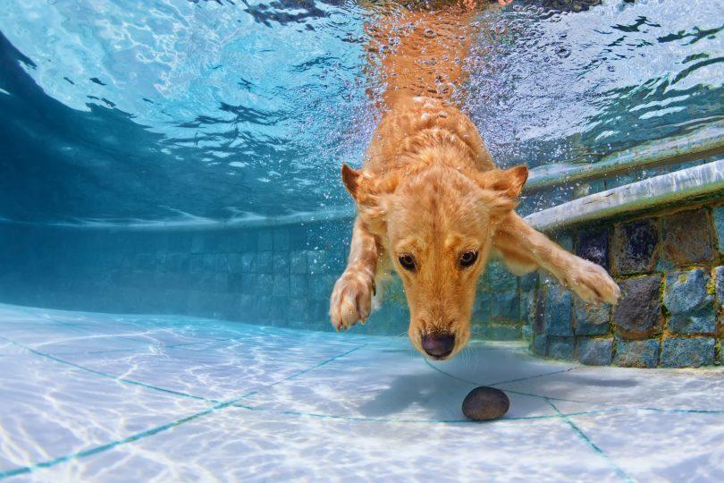 tecnología-permite-perros-bucear-a-500-metros-durante-media-hora-810x540
